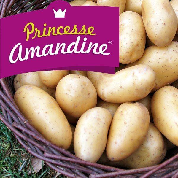 Amandine 60 Plants de pomme de terre