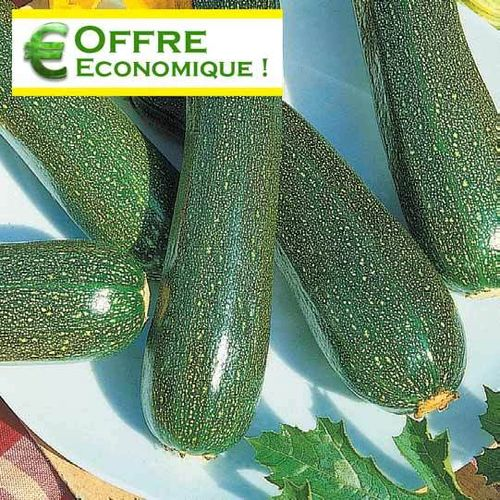 COURGETTE BLACK BEAUTY 25g