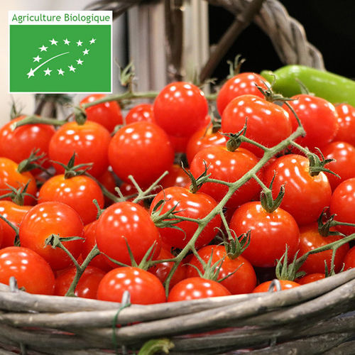 TOMATE CERISE RED CHERRY BIO 0,3g