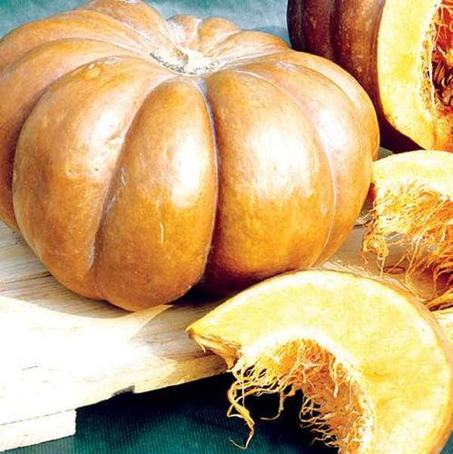 COURGE MUSQUEE D'HIVER DE PROVENCE 2g