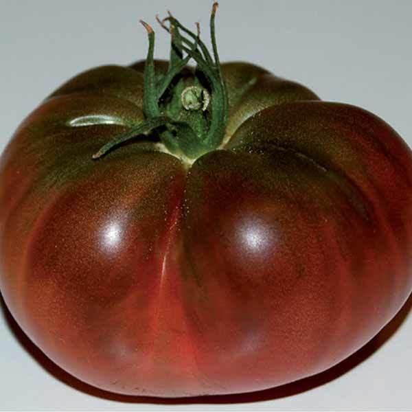 Tomate noire de crimee 0 2g graines elem - Tomate de crimee ...