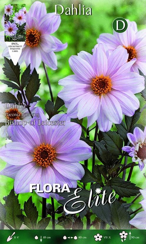 dahlia fleur de pivoine la collection de 3x1 bulbe graines elem. Black Bedroom Furniture Sets. Home Design Ideas