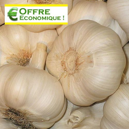 AIL ROSE GAYANT Le filet de 500 g